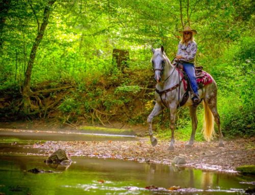 WORLD WIDE TRAIL RIDE VIDEO COMPETITION