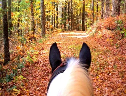 World Wide Trail Ride Video Competition Extended to October 31, 2021